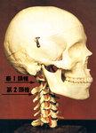 気功整体頚椎