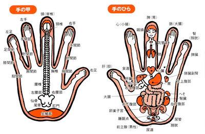手の反射区肩こり腰痛